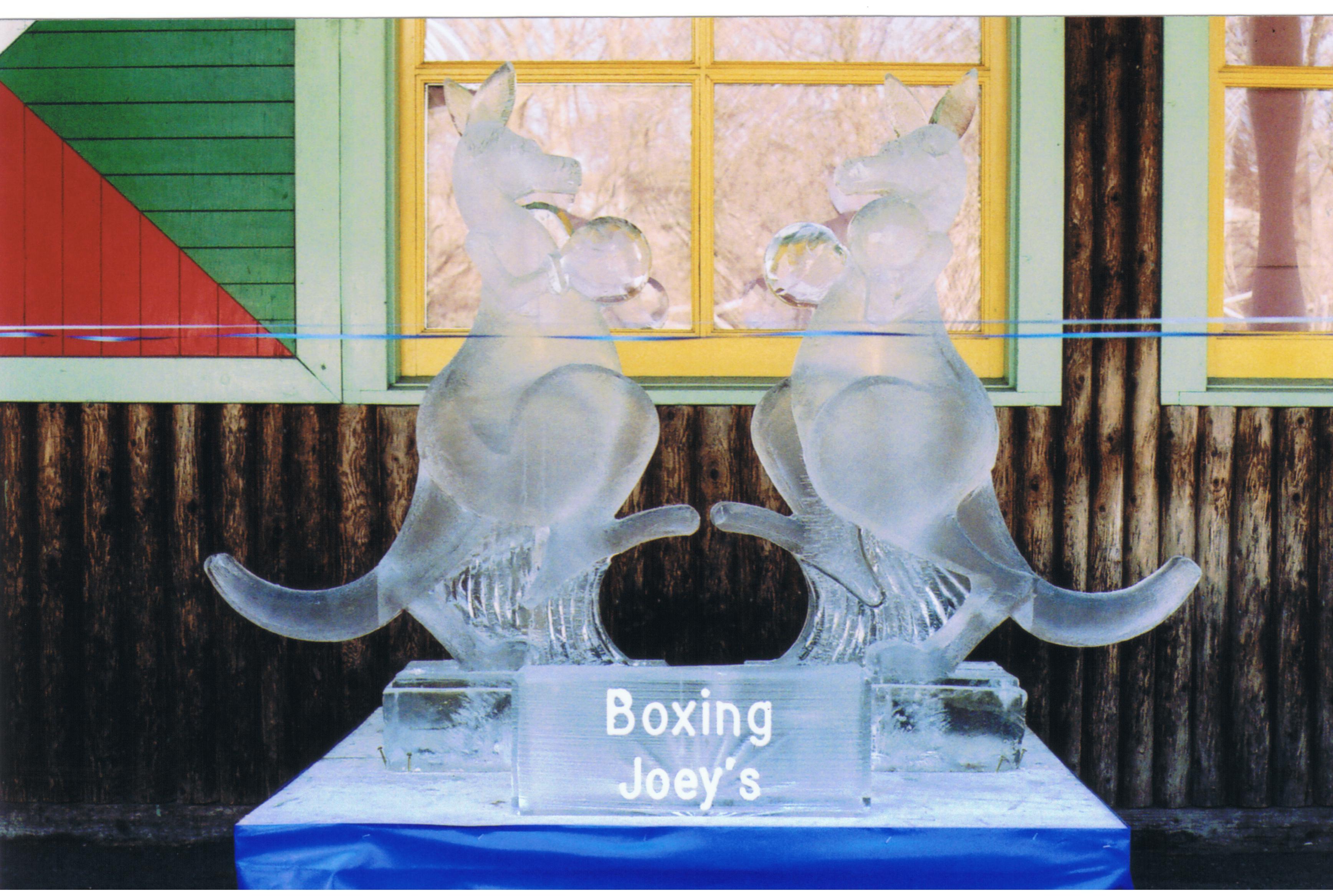 Boxing Joeys